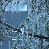 Колючий лёд :: Вера Моисеева
