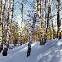 Был скуп февраль на солнечные дни... :: Лесо-Вед (Баранов)