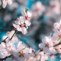 Аромат весны :: Nyusha