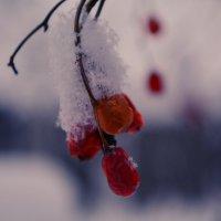 Морозная калина :: Ангелина Зеленская