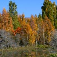 На берегу озера-ОСЕНЬ- :: aleks