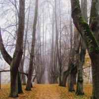Петровское, осень. :: Нина