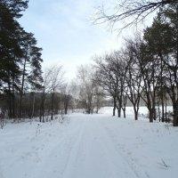 Зимняя дорога :: Александр Подгорный