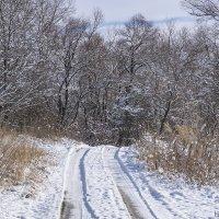 Дорога в зимний лес :: Игорь Сикорский