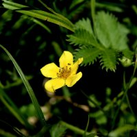 букашка на цветке :: юлия