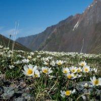 цветы :: Константин Шабалин