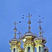 купола с птицами :: Елена