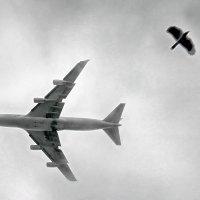 Две птицы :: Владимир Анатольевич
