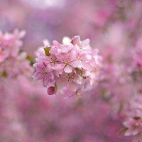 Скоро весна :: Екатерина Исаенко