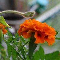 Цветок :: Александра Жорова