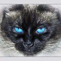 Взгляд2-«Кошки очарование мое!» :: Shmual Hava Retro