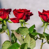 Три розы :: Игорь Сикорский