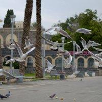 Чайки :: Александр Деревяшкин