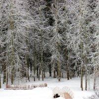 Графика зимы. :: Нина