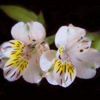 Есть глаза у цветов....В душу нам глядят цветы земли... :: Людмила Богданова (Скачко)