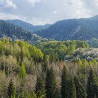 Иле-Алатауский национальный парк :: Роман Попов