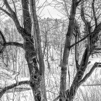 Зимняя графика :: Viacheslav