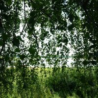 Сквозь листву... :: Алёна Савина