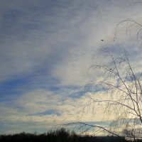 Февральское небо . :: Мила Бовкун
