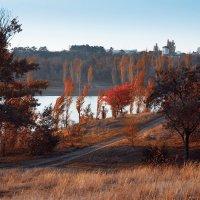 Красная осень :: Alexander Asedach