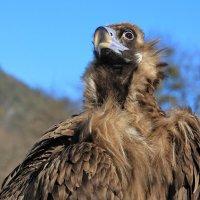 не маленькая и очень гордая птичка :: Анатолий Стрельченко
