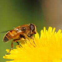 Сладкий нектар :: Swetlana V