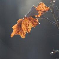 Мрачный февраль :: Swetlana V