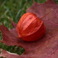 Осенний гербарий :: Татьяна Ивановна