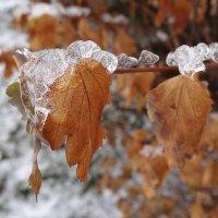 Зима еще хлопочет.... :: LORRA ***