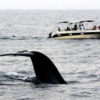 Сафари на мигрирующих китов 4/5 :: Асылбек Айманов