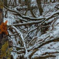 Зимняя вешенка :: Владимир Натальченко