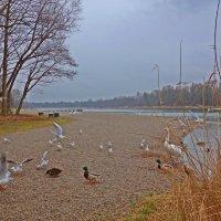 Февральский дождливый день на озере... :: Galina Dzubina
