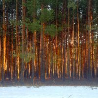 Закат осветил весь лес насквозь! :: Валентина ツ ღ✿ღ