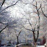 Зима во дворе. :: Владимир Бочкарёв
