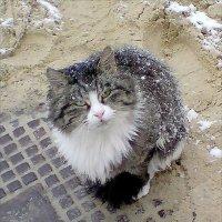 Кошка. :: Владимир Бочкарёв