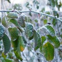 Внезапные заморозки :: БОРИС ЯКИНЦЕВ