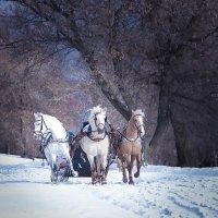 ...тройка лошадей :: Elena Tatarko (фотограф)