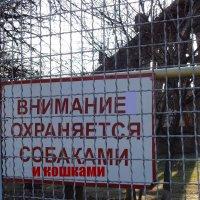 Внимание охраняется собаками и кошками :: Алекс Аро Аро