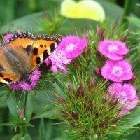 Бабочка :: secret-33 Анастасия Е.