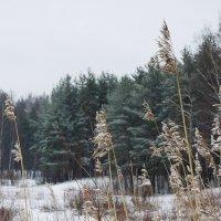 Снег медленно кружит  навевая свой грустный мотив в ритме вальса... :: Елена Павлова (Смолова)