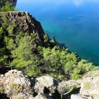 Лиственницы спускаются к самой воде :: Ольга Чистякова