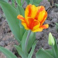 Необычный цветок :: Дмитрий Никитин