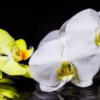 Ночь, дождь, орхидеи. :: Вадим Качан