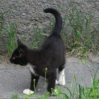 Бездомный котенок :: Вера