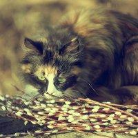 запахло весной :: Viktoriya Bilan