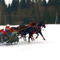 День Коня 22 февраля 2016 в д. Ерофеевка в Вологодской области :: Ирина Бархатова