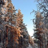 Лесными тропинками :: Ольга