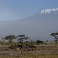 Снега Килиманджаро и полуденный зной :: Марина Мудрова
