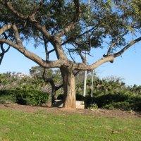 Дружелюбное дерево :: Герович Лилия