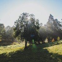 Осеннее утро :: Алёнка Шапран